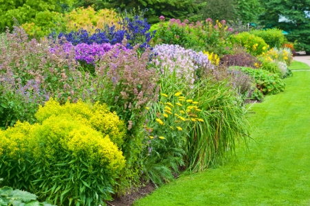 easy care flowering shrubs