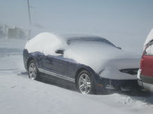 Snow covered Mustang