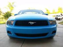 Mustang 0031