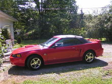 stang1 (Large)