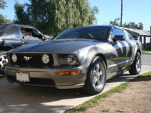 05 Mustang 3