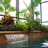 This Pool planter has such a combo of plants - Artillery fern, Blackie Sweet Potato, Bottle Palms, Mammy Crotons and Yellow Lantana for color. It just grows like crazy and we trim it from the poolside.