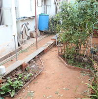 My house, the 'walkway' and my little garden.  Gerbera on the left, Tomato towards the right.