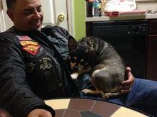 My 13lb Chihuahua Deuce... vicious and needy.