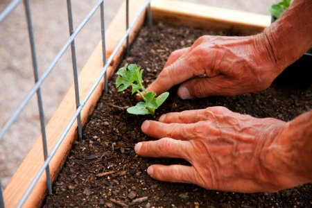 Image Result For Square Foot Gardening Soil Mix