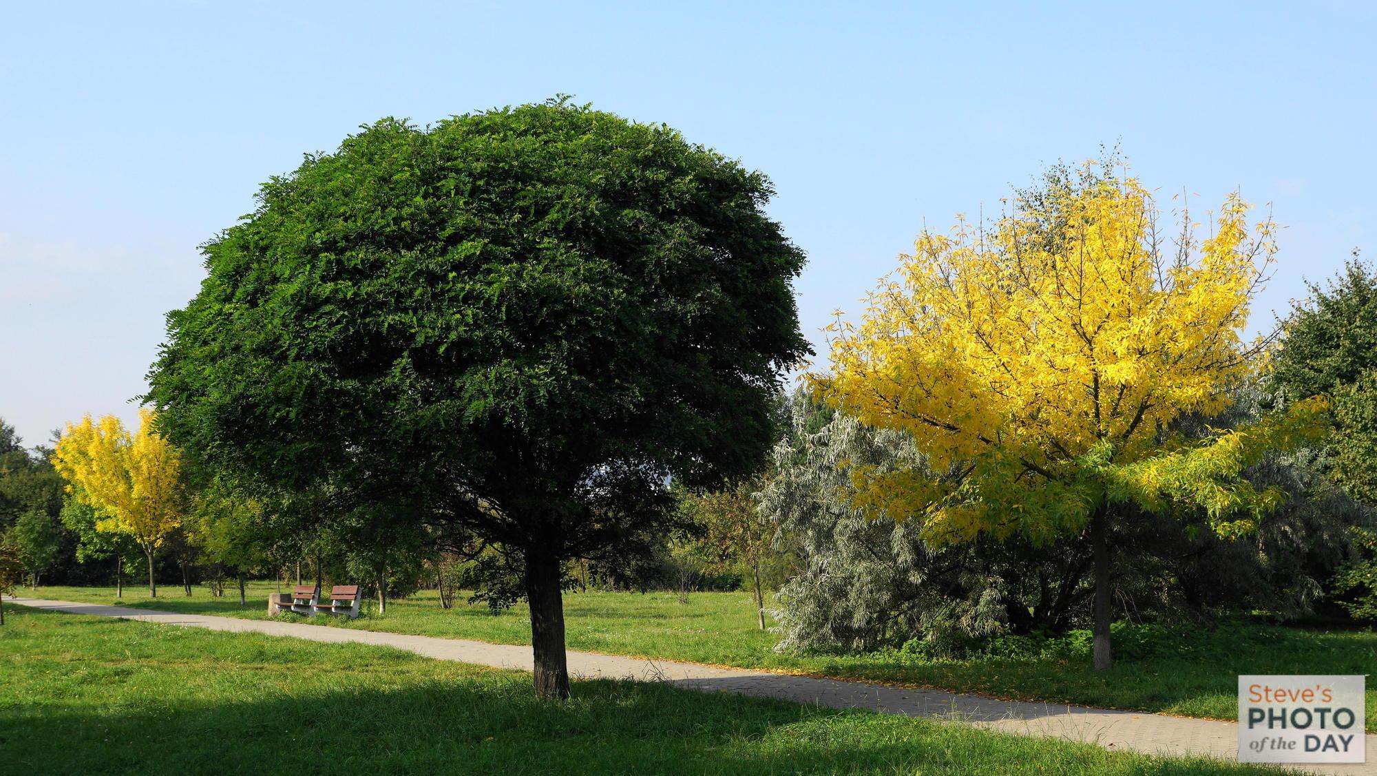Park we Wrzeszczu