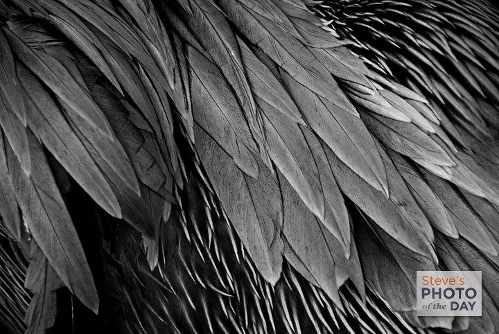Pelican Silk