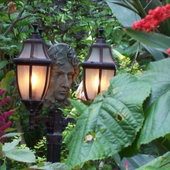 Day light photo of the garden man and lamp post. Clerodendrum Panticulatum on right.