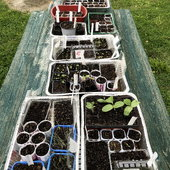 Our gardening supplies are derived from recycled food and household containers.