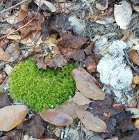 More lovely forest floor color and designs. Moss or fungi. Name anyone?