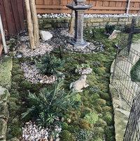 Moss garden with podacarpus and pagoda.