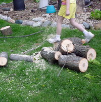 May-2003. Large logs to save for Firewood.