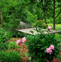 Hammock Peonies - Left to Right _____, Dinner Plate, Raspberry Sundae