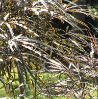 Hoping the oleander blooms in Feb. Transplanted them in Nov. We'll see.