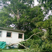 Our Tree scare which barely missed the roof....damaged our back yard fence but really we were blessed.