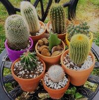 A few of my cactus plants.