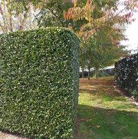 Camellia Boundary & InnerHedging
