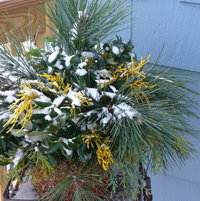 Another $3.00 winter greenery arrangement!