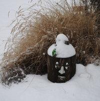 Tree face in winter