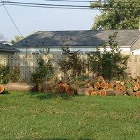 September, 2007.  Trees down.