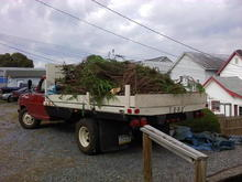 I took down a large bush/tree at a client's house and hauled the brush to the dump, Oct 2, 2013.
