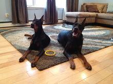 Our furbabies Logan and Eva