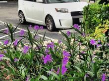 Flower Xb
