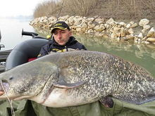 Catfish 3 3211531c